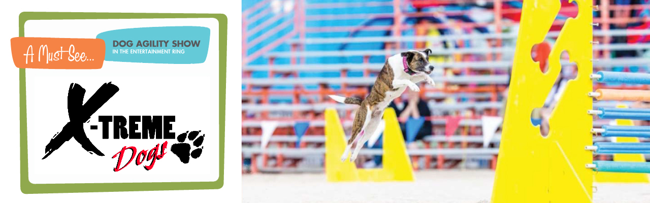 Meet the EXtreme Dogs