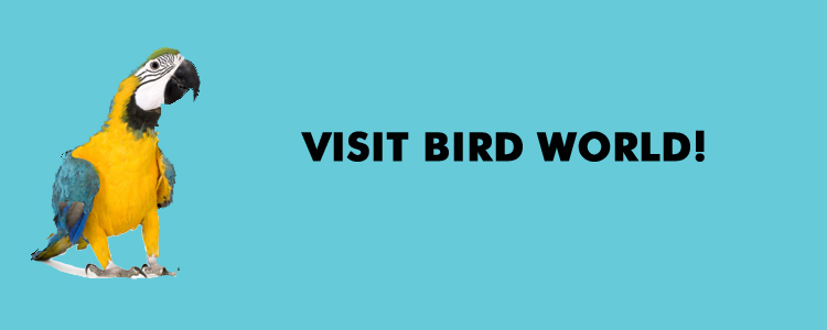 bird world banner copy